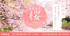 北海道・東北・関東・甲信越・北陸エリアの旅先で撮影した桜の写真を投稿しよう!抽選で20名様にびゅう商品券3,000円が当たる!