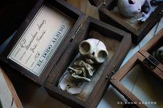 Homunculum domus boxed ooak art doll . Gnome by Eldodoalbino