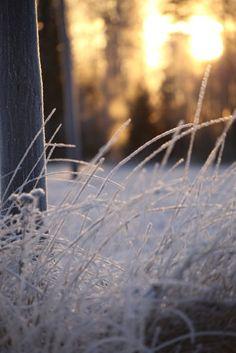 Frost. www.menolippumaalle.fi