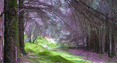 Penmachno Snowdonia North Wales - (null)