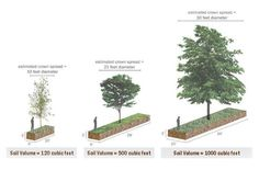 Soil & water volume in the life of a street tree