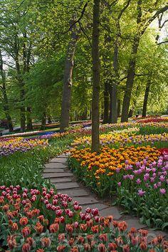 Tulip-beds in Keukenhof, Lisse, Holland