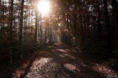 Autumn - Al my photos : https://www.facebook.com/chloebphoto/