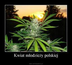 kwiat młodzieży polskiej :)