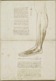 Leonardo da Vinci (Vinci 1452-Amboise 1519) - The tendons of the lower leg and foot