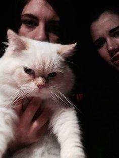Found Cat - Burmese - Toronto, ON, Canada M6G 1V8 on September 04, 2014 (13:00 PM)