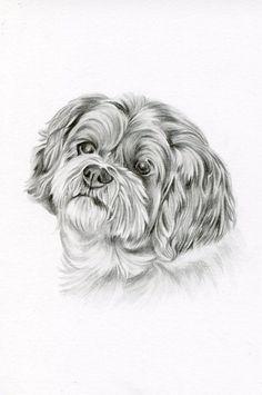 Custom Pencil Drawing size 4 x 6 Custom Pet Portrait Custom Mini Drawings, Pencil Art Drawings, Animal Sketches, Animal Drawings, Amazing Drawings, Cool Drawings, Dog Pencil Drawing, Bichon Dog, Shih Tzu