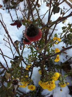 Fleur et neige
