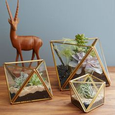 Faceted Terrariums - Love these for the balcony