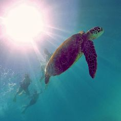 I'm and welcome to the amazing and If you love turtles and the fantastic underwater world of the Great Barrier Reef then you'll absolutely love Gladstone! Adventure Holiday, Gladstone, Camping And Hiking, Underwater World, Great Barrier Reef, Turtles, National Parks, Island, Amazing