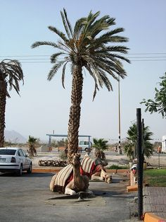 Assorted car park Israel