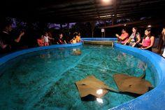Tanque das arraias e tubarões são um dos atrativos da ilha dos aquários em Porto Seguro.