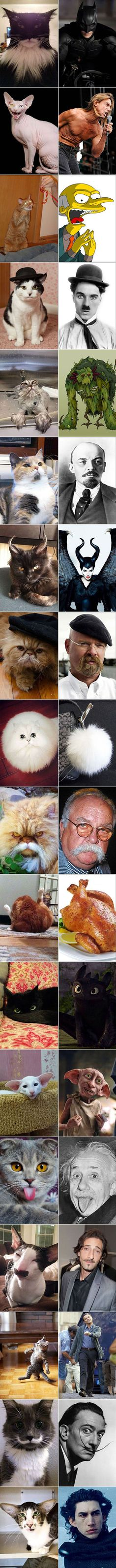 Cats That Look Like Something Else
