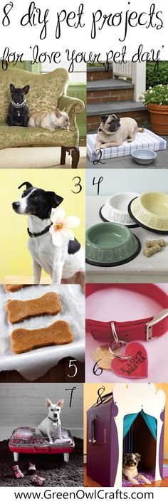 green owl crafts: { Love Your Pet Day } Pet Crafts
