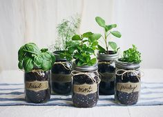 DIY Mason Jar Fresh Herb Garden | Free People Blog #freepeople
