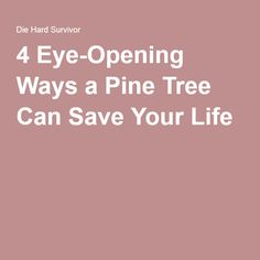 4 Eye-Opening Ways a Pine Tree Can Save Your Life