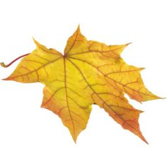 autumn_leaves_PNG3595.png