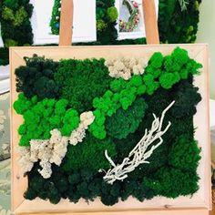 Вертикальное озеленение (@greenmoss48) • Фото и видео в Instagram Shag Rug, Home Decor, Shaggy Rug, Decoration Home, Room Decor, Blankets, Home Interior Design, Home Decoration, Interior Design