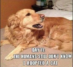 49 lustige Tiermemes, damit Sie lachen – 49 funny animal memes to make you laugh – order to Funny Animals With Captions, Funny Animal Jokes, Funny Dog Memes, Funny Pictures With Captions, Cute Funny Animals, Funny Animal Pictures, Cute Baby Animals, Cat Memes, Funny Cute
