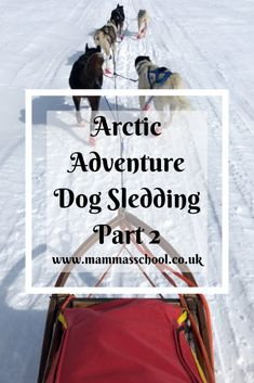 Read part 2 about my Arctic Adventure. I spent a week dog sledding and wild camping up in the Arctic as one of my 12 outdoor challenges Wild Camp, Muscle Power, Poor Dog, You Are The World, Worldwide Travel, Travel Abroad, Sled, World Traveler, Day Trips