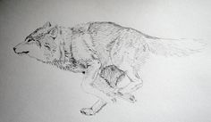 a journal of my animal drawings screen printed on textiles 3d Wolf Tattoo, Go Tattoo, Wolf Tattoos, Body Art Tattoos, Running Drawing, Running Art, Running Wolf, Animal Sketches, Animal Drawings