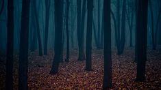 Bilderesultat for dark forest