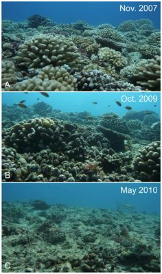 Australia's Great Barrier Reef is in decline from Ocean Acidification