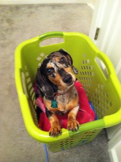What? Am I not supposed to be in your dirty laundry?? Submitted by Elizabeth