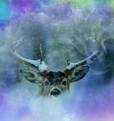 My edit xx Please dont repin!!:)xx Moose Art, Animals, Animais, Animales, Animaux, Animal