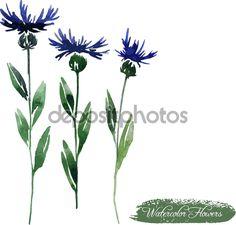 Cornflowers drawing by watercolor - Стоковая иллюстрация: 57881791