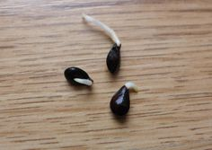 Od nasionka do własnych jabłek, czyli jak wyhodować sobie drzewo owocowe?