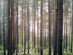 floresta na Letonia