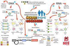 Mapa mental sobre os ácidos nucleicos