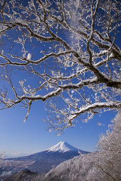 Mt. Fuji:樹氷