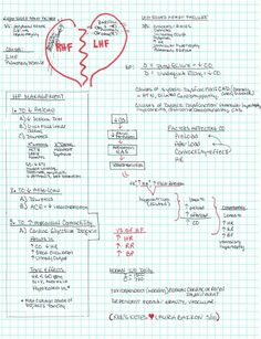 Heart Failure Wish I had this in nursing school! Good to know if I ever become a nurse! Nursing School Tips, Nursing Notes, Nursing Tips, Nursing Scrubs, Nursing Schools, Cardiac Nursing, Nursing Mnemonics, Rn School, School Stuff