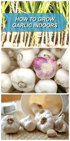 How To Grow Garlic In Containers Indoors | Handy U0026 Homemade