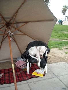 Under an Umbrella Sleeping Dog in Lawn Chair At Venice by tjanes28