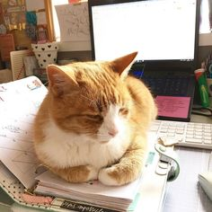 We are training our new intern today his name is Bailey he likes tuna sleeping in and will be writing mostly about mice  #weekendvibes