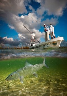 Catch of the Day remarkable bonefish photo Sport Fishing, Kayak Fishing, Fishing Boats, Fishing Tips, Saltwater Flies, Saltwater Fishing, Deep Sea Fishing, Gone Fishing, Kitsch