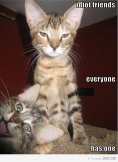 HAHA! Idiot friends. Everyone has one