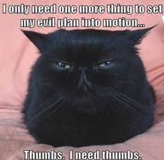 Why cats haven't taken over the world yet.