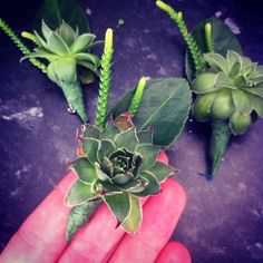 The Boutonnieres that Anthony made for our wedding : Photo by anthonyzinonos • Instagram