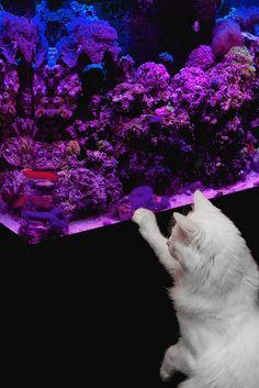 Cat - fishing ♥