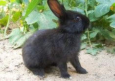 Delightful rabbit #rabbitsareawesome