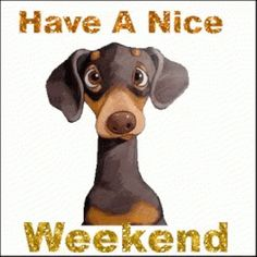 Good Day Quotes, Morning Quotes, Quote Of The Day, Weekend Gif, Happy Weekend, Puppy Quotes Funny, Psalm 118, Friday Humor, Day For Night
