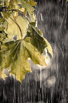 Raining through the leaves. If you hit the GIF Button it will rain through the leaves. Walking In The Rain, Singing In The Rain, Rainy Night, Rainy Days, Rainy Weather, I Love Rain, Rain Go Away, Sound Of Rain, Rain Drops