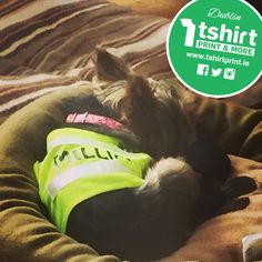 Create personalised gear for your beloved pets too - how cute is this little guy? Guys, Create, T Shirt, Supreme T Shirt, Tee Shirt, Sons, Tee, Boys