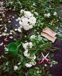 Top view of roses and gardening tools. Grandmas Garden, Gardening Tools, Spring Garden, Top View, Roses, Gardens, Stock Photos, Pink, Rose