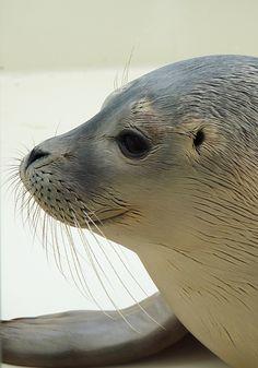 Urlaub in Zeeland - Renesse - kleiner Seehund - Glück - Monatsrückblick - Samentüten selber basteln