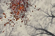 International Garden Photographer of the Year 2010:  Trees category, 2nd place: Tom Wundrak, Autumn Melody (Franconia, Germany).
